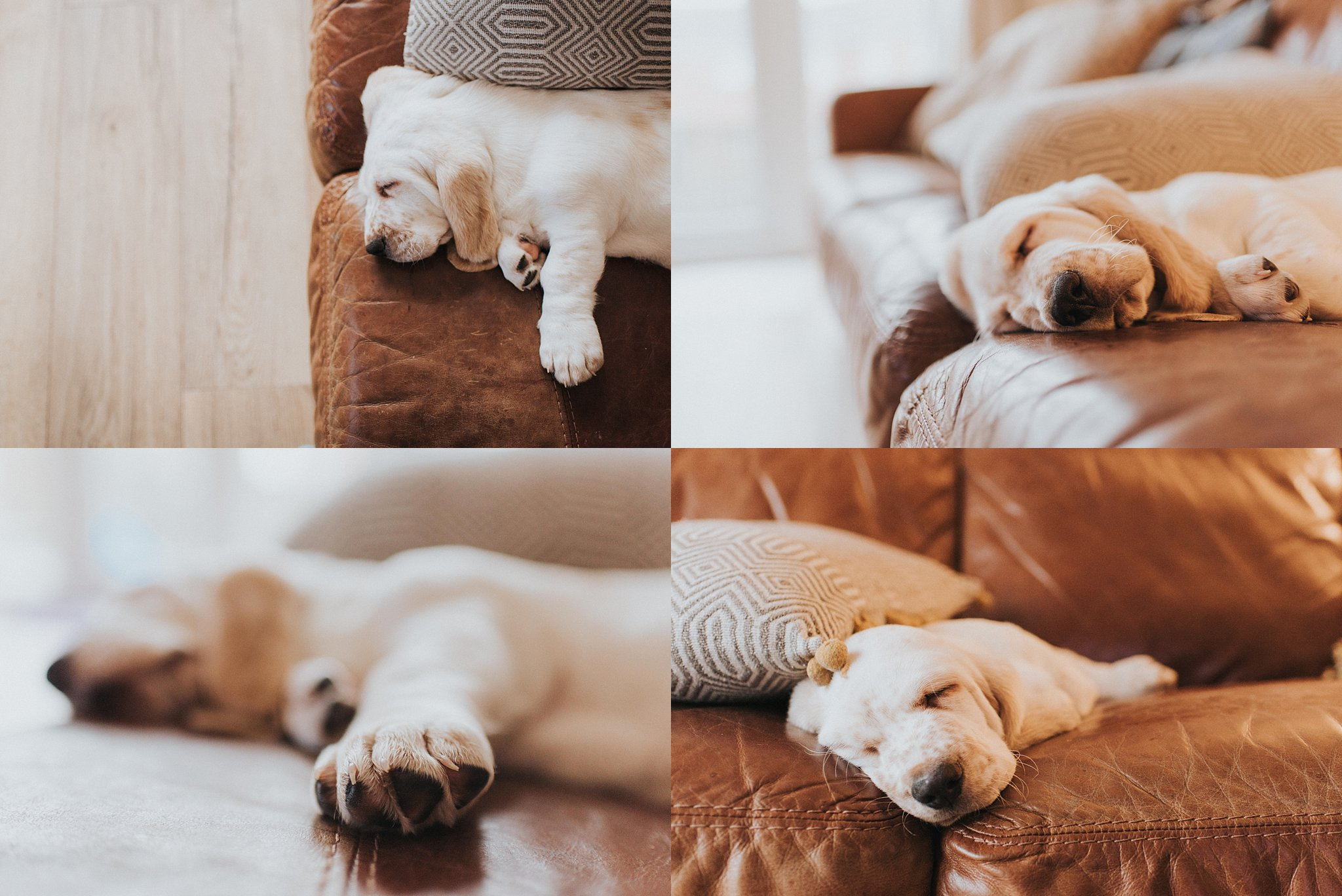 Image: puppy chesterfield