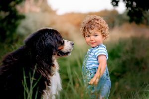 Image: Dog Pet Photographer Chesterfield